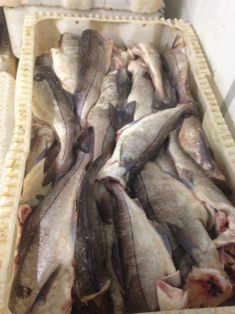 фото рыба в мурманске виды